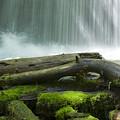 Splash by Idaho Scenic Images Linda Lantzy