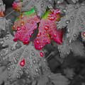 Splash Of Color by Noah Cole