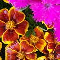 Splash Of Color by Vijay Sharon Govender