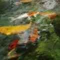 Splash Of Koi by Jo-Anne Gazo-McKim
