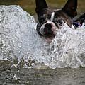 Splashdown by Susan Herber