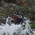 Splashed At Haystack Rock by Amelia Emery