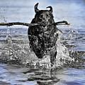 Splashing Fun by Chris Cousins