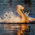 Splashing Fun by Nick Biemans