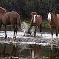 Splashing Wild Horse In The Salt River by Dave Dilli