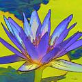 Splendid Water Lily by Teresa Zieba