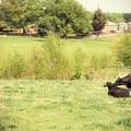 Splendor In The Grass by Paulette B Wright
