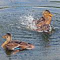 Splish Splash by Asbed Iskedjian