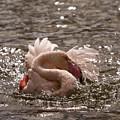 Splish Splash  by Angel Ciesniarska