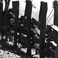 Split Rail Fence by Donna Thomas
