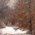 Splitrail Winter by Karen  French