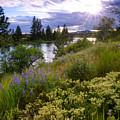 Spokane River Wildflowers by Idaho Scenic Images Linda Lantzy