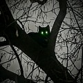 Spooky Cat by Amy Clements