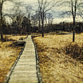 Spooky Hike On The Appalachian Trail by John Prause