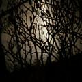 Spooky Sumac by Marilyn Hunt