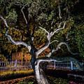 Spooky Tree by Scott Patterson