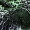 Spooky Trees by Svetlana Sewell