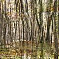 Spooky Woods by Crystal Harman