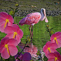 Spoonbill Through The Flowers by TJ Baccari