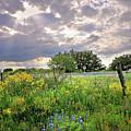 Spotlight On Spring by Lynn Bauer