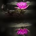 Spotlight Reflection - Water Lily by Penny Lisowski