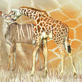 Spots And Stripes - Giraffe - Antelope by Carol Cavalaris