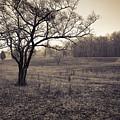 Spotsylvania Battlefield by Harry H Hicklin
