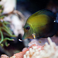 Spotted Aquarium One Fish by Arletta Cwalina