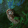 Spotted Owl In Ancient Forest by Nick Gustafson