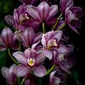 Spray Of Cymbidium Orchids by Julie Palencia