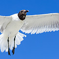 Spread Those Wings Pano by Jennifer White