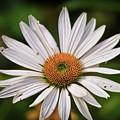 Spread Your Petals by Kerri Farley