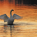Spreading Her Wings In Gold by Randall Branham
