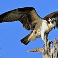 Spreading Wings by Bill Dodsworth