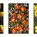 Spring - Desert Style 2 by Jill Reger