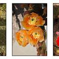 Spring - Desert Style by Jill Reger