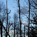 Spring 09  Tree Skyline by M Brandl