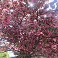 Spring 12 by Funmi Adeshina