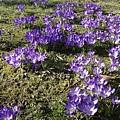 Spring 2 by LDS Dya