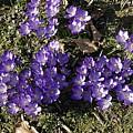 Spring 3 by LDS Dya