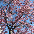 Spring 4 by Funmi Adeshina