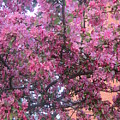 Spring 7 by Funmi Adeshina