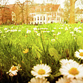 Spring. A Medow Spread With Daisies In Baden-baden, Germany by Gerlya Sunshine