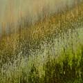 Spring Abstract by MingTa Li