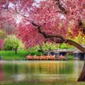 Spring Afternoon In The Boston Public Garden - Boston Swan Boats by Joann Vitali