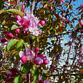 Spring Apple Blossoms- Spring Flowers by Kathy  Symonds