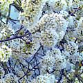 Spring Around by Jasna Dragun