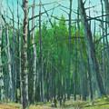 Spring Aspens by E Colin Williams ARCA