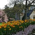Spring At Spring Grove by Terri LeSaint-Keller