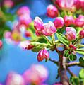 Spring Awakening 2 - Paint by Steve Harrington